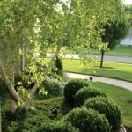 Organic Tree & Shrub Lawn Care in Gaithersburg MD & Beyond