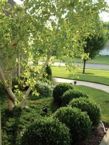 Organic Tree and Shrub Lawn Care- Maryland