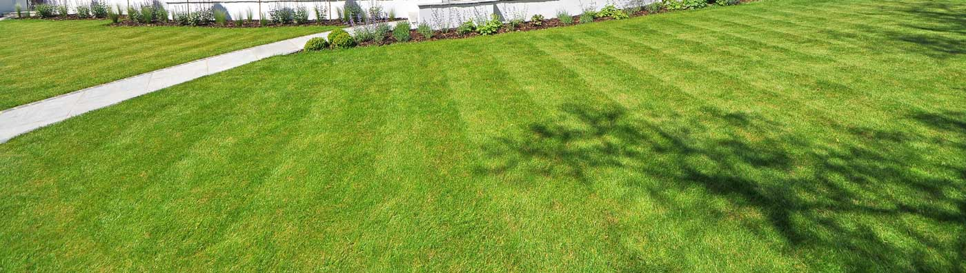 Green Lawn Care Service- Lawn Weeds Control Gaithersburg MD