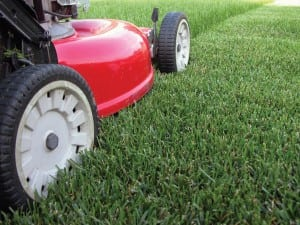 Lawn Mowing- Organic Lawn Care Service Gaithersburg MD
